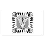 leonardo skull Sticker (Rectangle 50 pk)