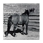 B&W Horse -Tile Coaster