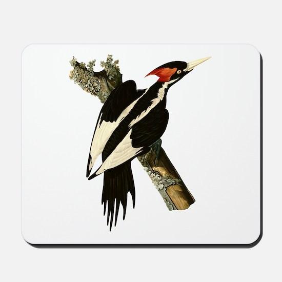 Ivory-Billed Woodpecker Mousepad