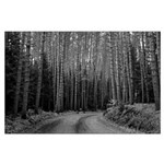 Country Road in Trees Poster