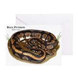 Ball python snakes Greeting Cards (10 Pack)