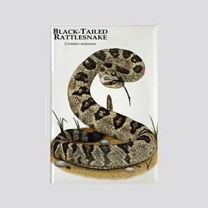 Black-Tailed Rattlesnake Rectangle Magnet