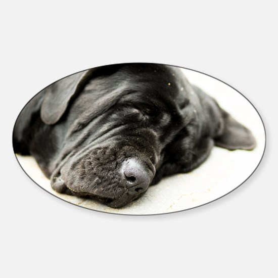 Neapolitan Mastiff Sticker (Oval)
