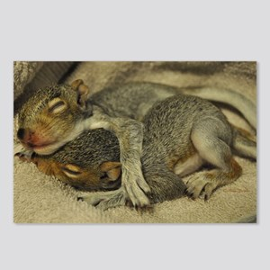 Baby Squirrel Postcards (Package of 8)