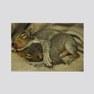 Baby Squirrel Rectangle Magnet