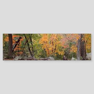 Lost Maples 002 Bumper Sticker