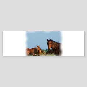 oKLAHOMA wILD HORSES Sticker (Bumper)