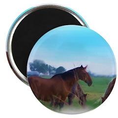 oKLAHOMA WILD hORSES 2.25