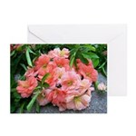 Cuttings Greeting Cards (Pk of 20)
