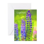Lupines Greeting Cards (Pk of 20)