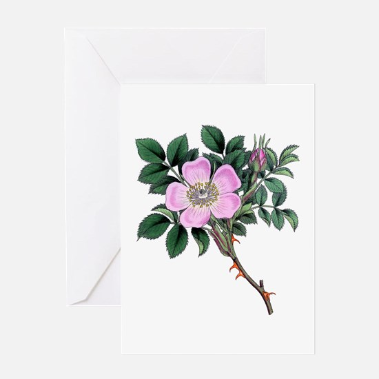 Dog Rose Greeting Card