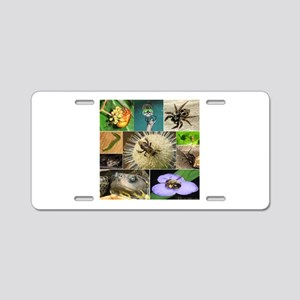 Photo Collage Insects and Small Animals (Set 3 of