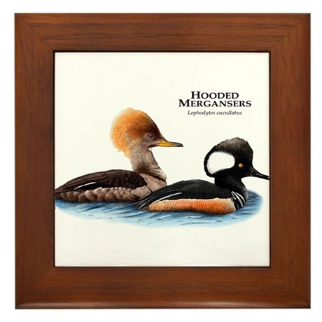 Hooded Mergansers Framed Tile