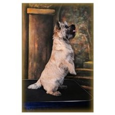 """""""Sitting Pretty"""" Cairn Terrier Poster"""