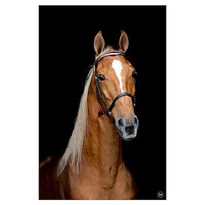 Sorrel Horse Poster