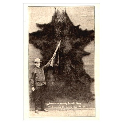 Big Brown Bear 1919 Poster