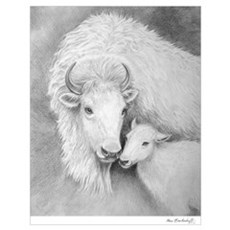 White Buffalo & Calf ~ Poster