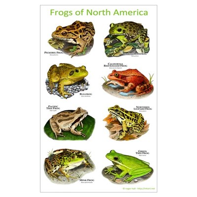 Frogs of North America Poster