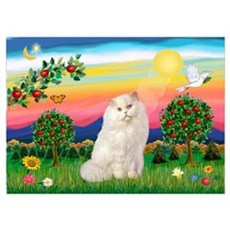 Bright Country / White Persian Poster