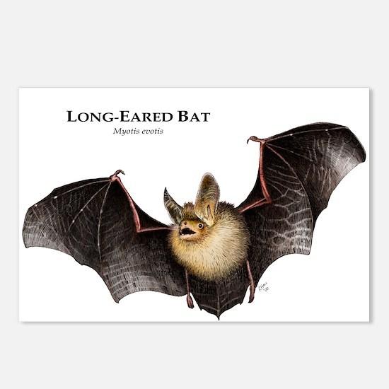 Long-Eared Bat Postcards (Package of 8)