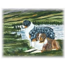 Austrailian Shepherd Blue and Poster