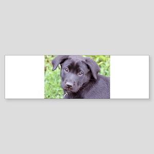 Princess Puppy Sticker (Bumper)