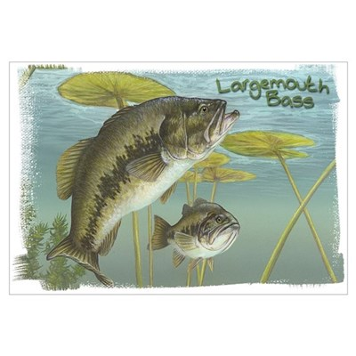 Largemouth Bass, Fish Framed Print