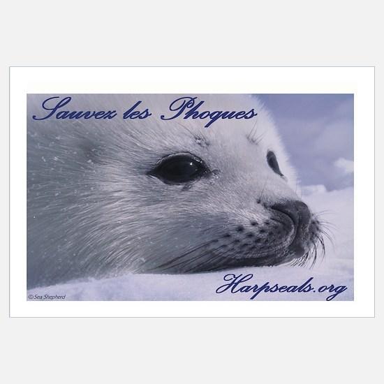 Sauvez les phoques