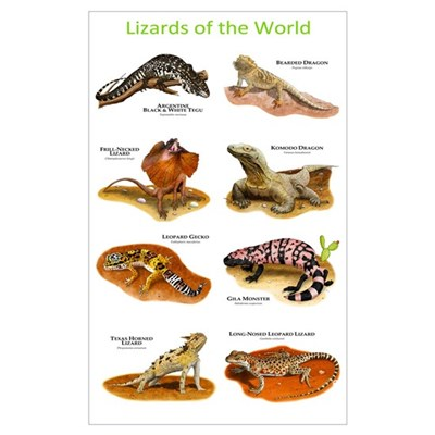 Lizards of the World Poster