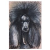 Standard poodle Wrapped Canvas Art