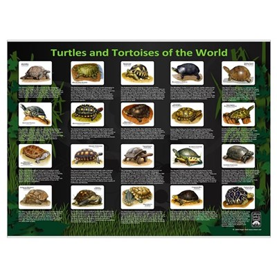 Turtles and Tortoises of the Poster
