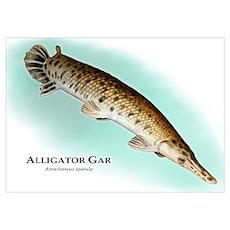 Alligator Gar Poster