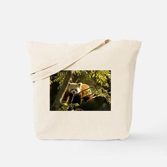 Red Panda 1 Tote Bag