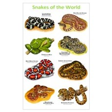 Snakes of the World Poster