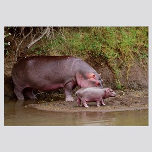 African Hippo Mom and Baby