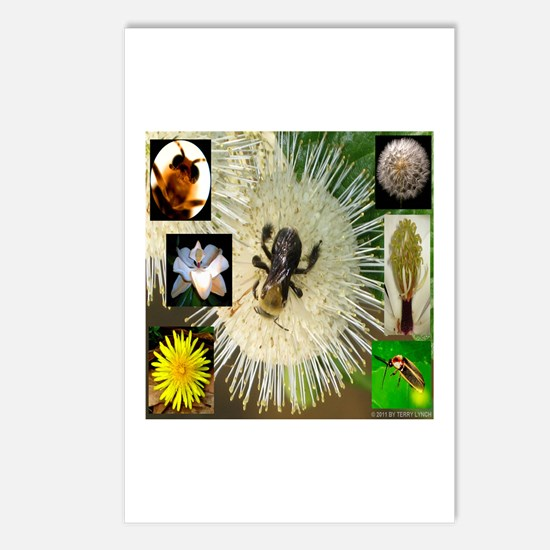 Photo Collage Flora and Fauna Postcards (Package o