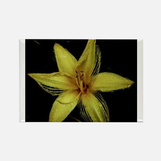 Yellow Lily Rectangle Magnet