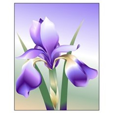 16 x 20 Iris Poster