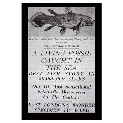Coelacanth Announcement 11x17 Print Canvas Art