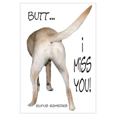 Yellow Lab I Miss You Poster