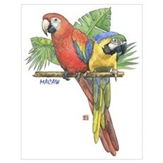 Tropical Macaws Poster