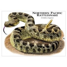 Northern Pacific Rattlesnake Poster
