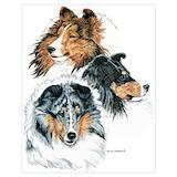 Sheltie dog Posters