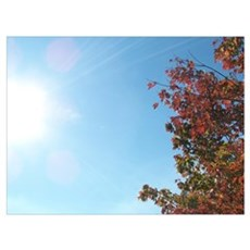 Sunshine & Changing Leaves Poster