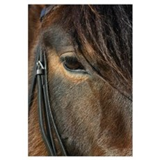 Andalusion mare close-up Canvas Art