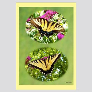 Eastern Tiger Swallowtails, Female & Male Framed P