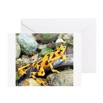 Golden Frog Greeting Cards (Pk of 20)