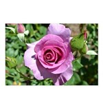 Beautiful Rose Postcards (Package of 8)