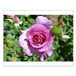 Beautiful Rose Small Poster