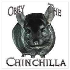 Chinchilla Obey Poster